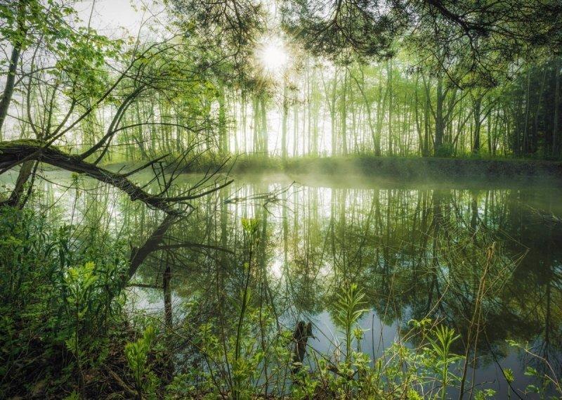 Schmidt 59670 Stefan Hefele - Lokalna Dżungla
