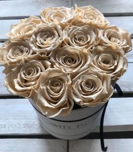 Ecru żywe WIECZNE róże w średnim białym boxie