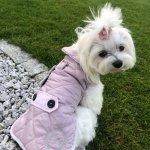 Kurtka dla psa przeciwdeszczowa SIENNA różowa Chloes Home