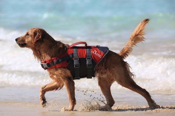 Life Jacket for dog MOSS