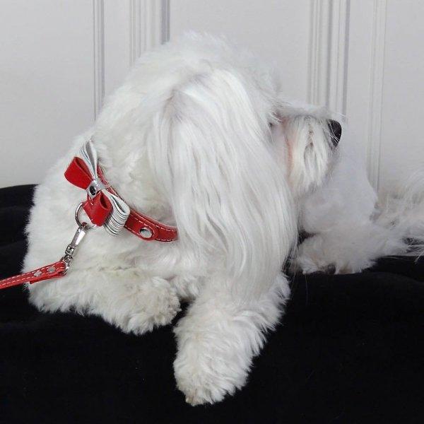 Luksusowa obroża PRESTIGE czerwona dla małego psa