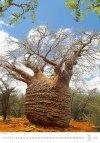 Kalendarz ścienny wieloplanszowy Trees 2021 - marzec 2021