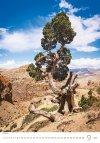 Kalendarz ścienny wieloplanszowy Trees 2021 - wrzesień 2021