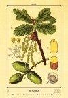 Kalendarz ścienny wieloplanszowy Herbarium 2021 - wrzesień 2021