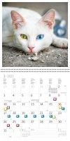Kalendarz ścienny wieloplanszowy Cats 2022 z naklejkami - styczeń 2022