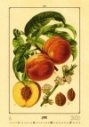 Kalendarz ścienny wieloplanszowy Herbarium 2021 - czerwiec 2021