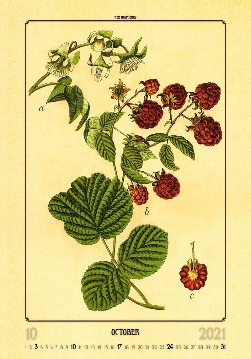 Kalendarz ścienny wieloplanszowy Herbarium 2021 - październik 2021