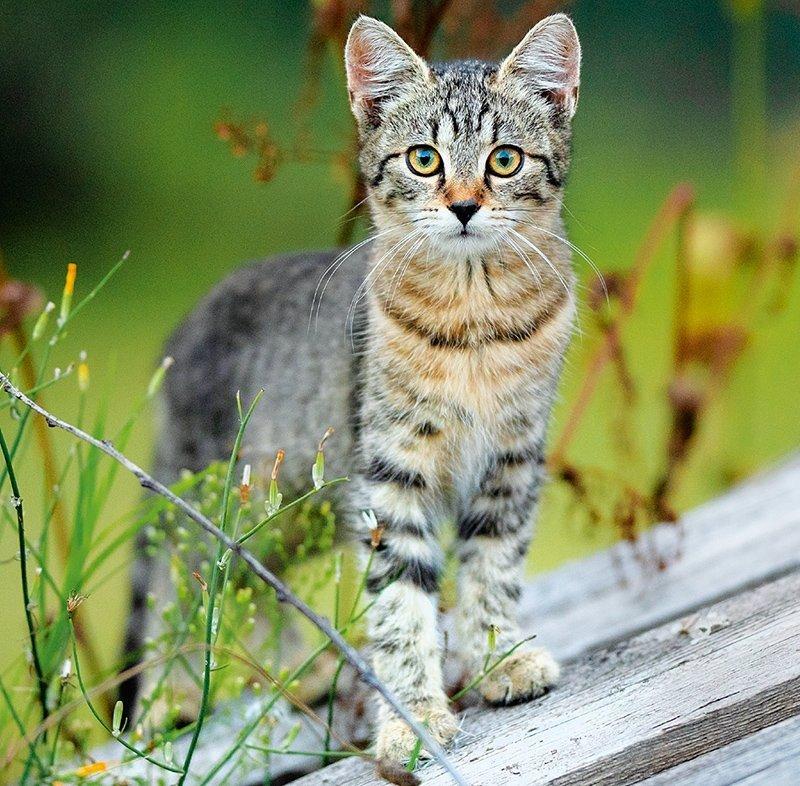 Kalendarz ścienny wieloplanszowy Cats 2022 z naklejkami - lipiec 2022