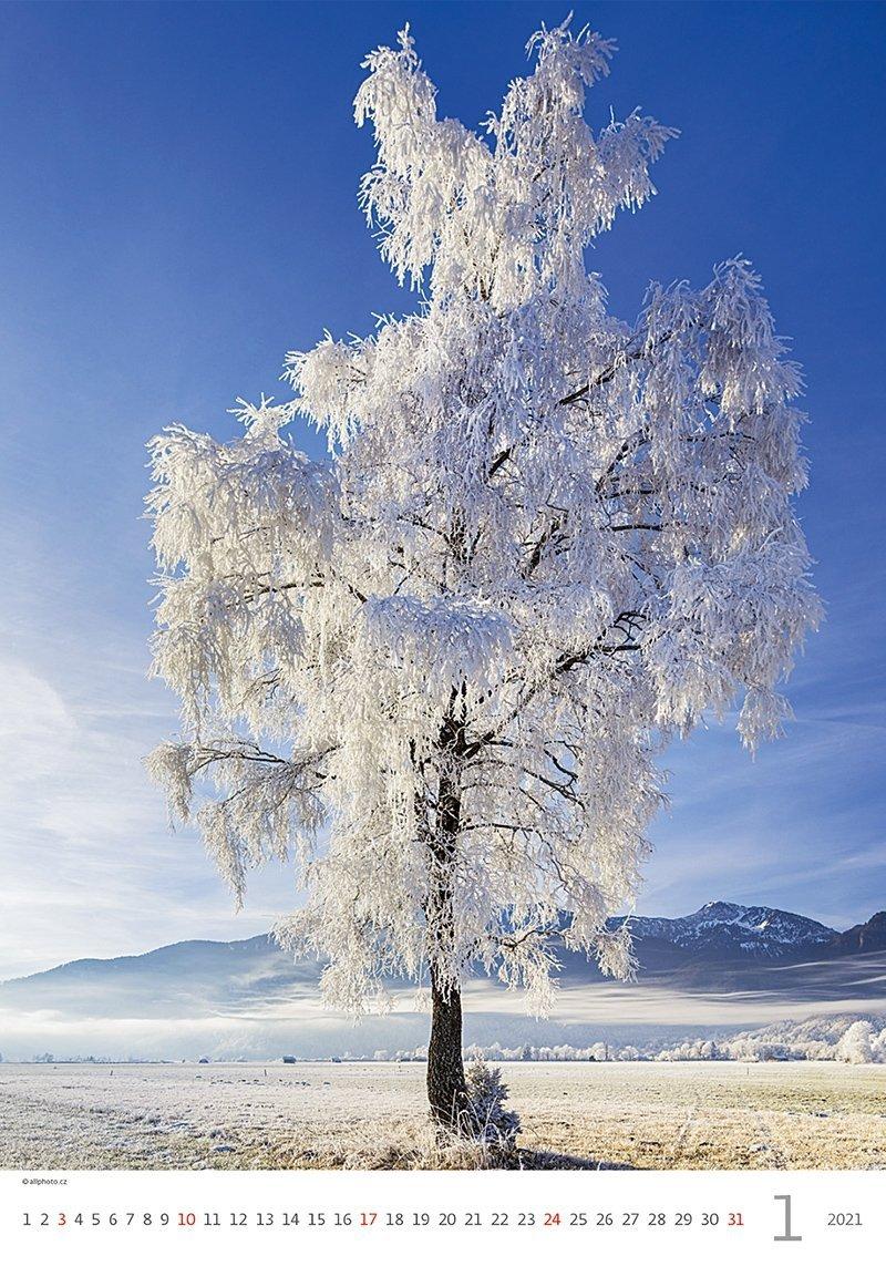 Kalendarz ścienny wieloplanszowy Trees 2021 - styczeń 2021