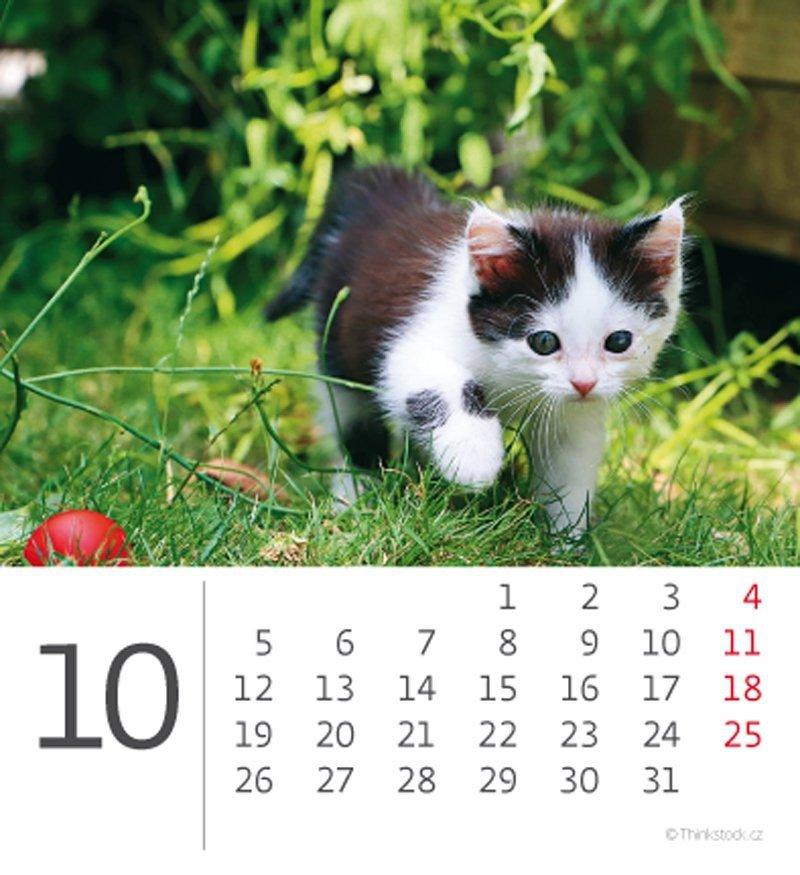 Kalendarz biurkowy 2020 mini Kotki - październik