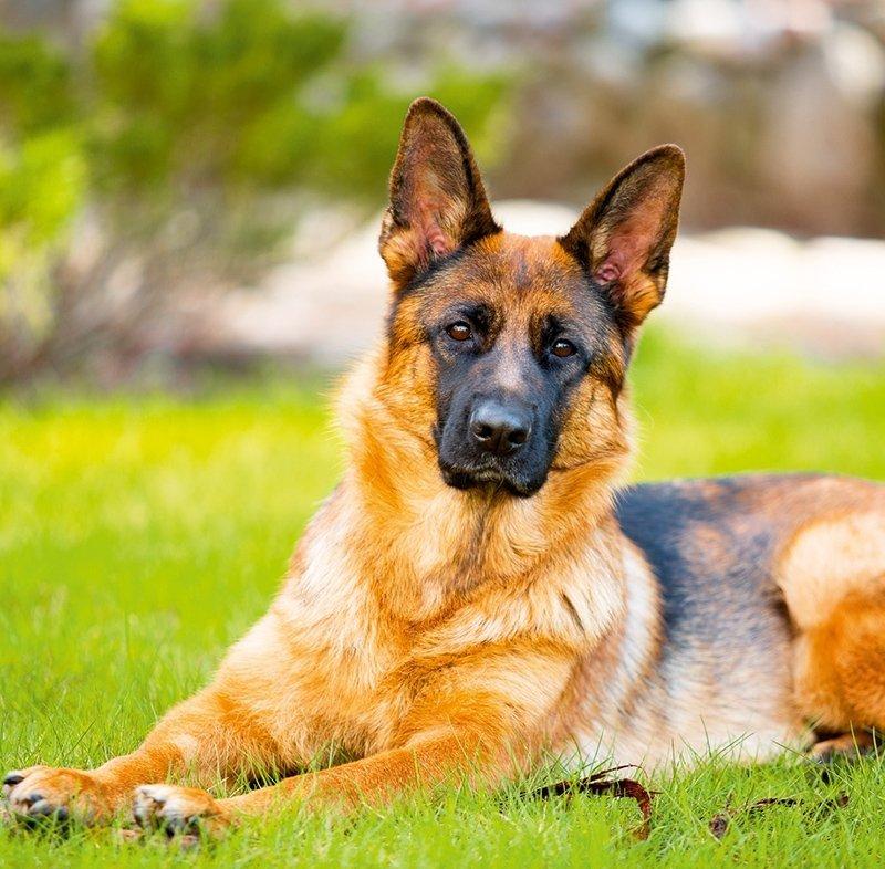 Kalendarz ścienny wieloplanszowy Dogs 2022 z naklejkami - marzec 2022