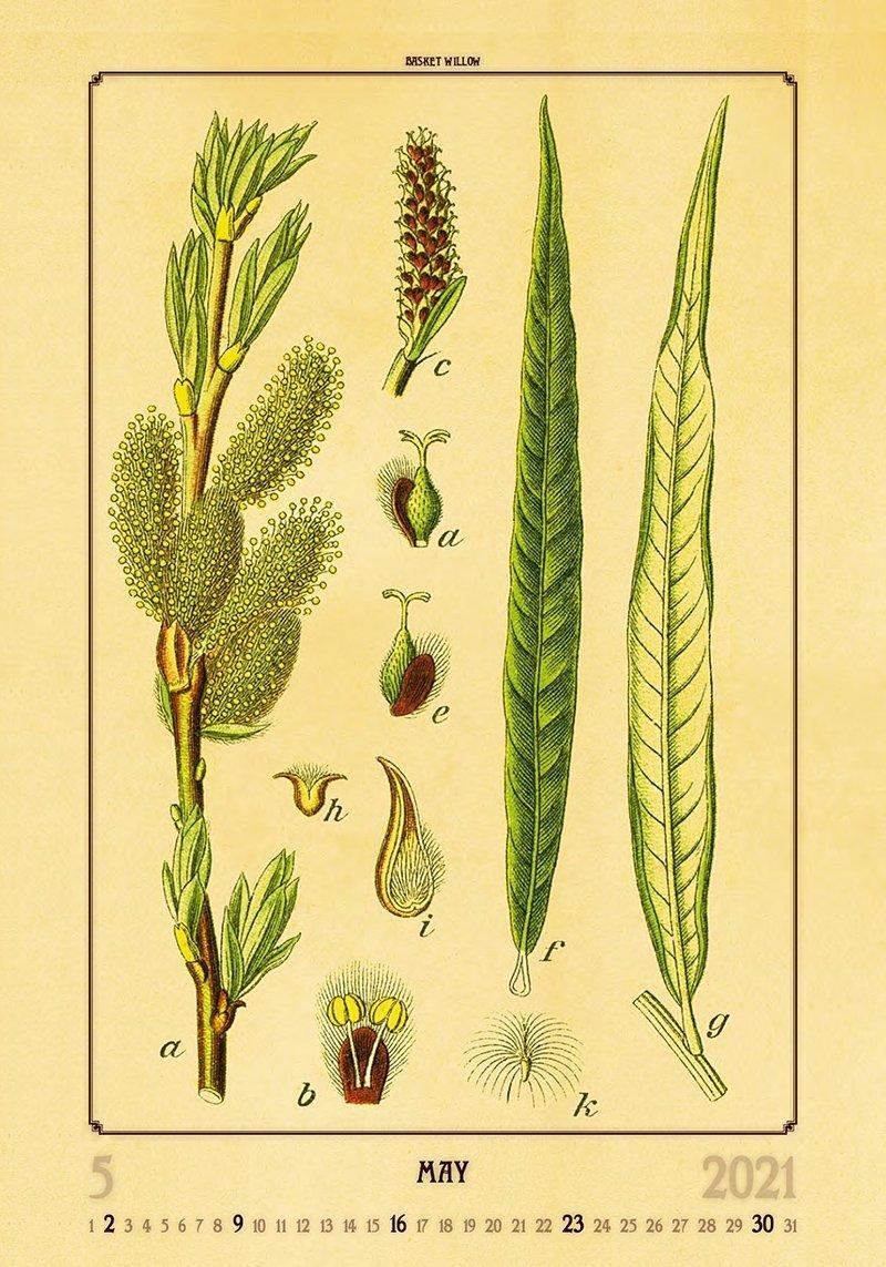 Kalendarz ścienny wieloplanszowy Herbarium 2021 - maj 2021