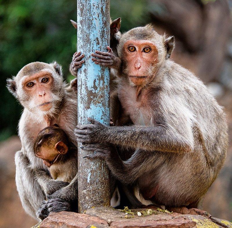 Kalendarz ścienny wieloplanszowy Animal friends 2022 z naklejkami - wrzesień 2022