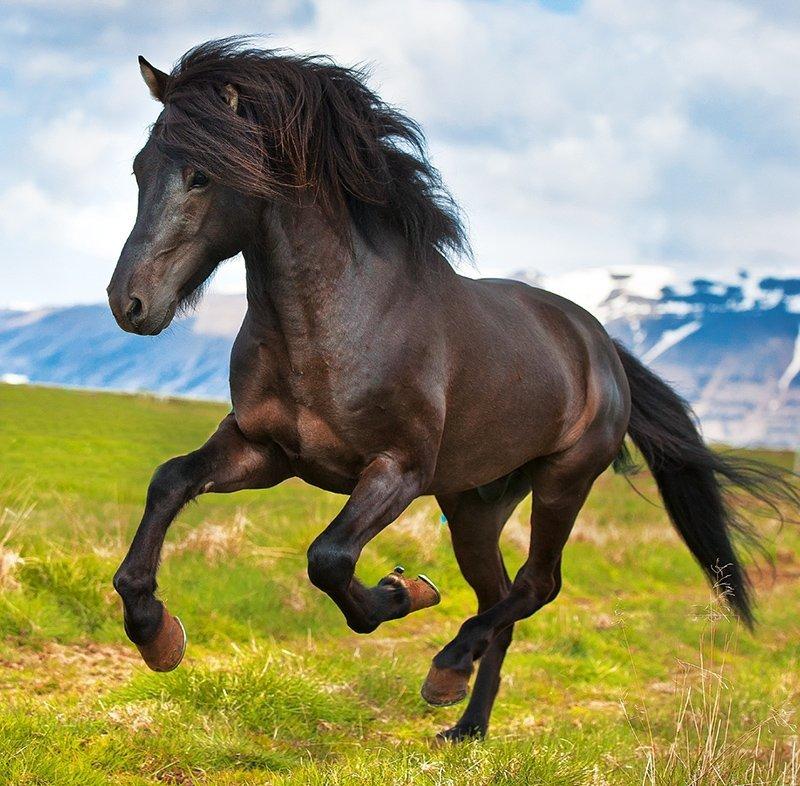 Kalendarz ścienny wieloplanszowy Horses 2022 z naklejkami - wrzesień 2022