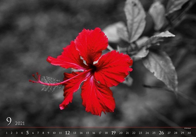 Kalendarz ścienny wieloplanszowy Black Red 2021 - exclusive edition - wrzesień 2021