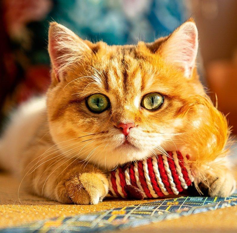 Kalendarz ścienny wieloplanszowy Cats 2022 z naklejkami - październik 2022
