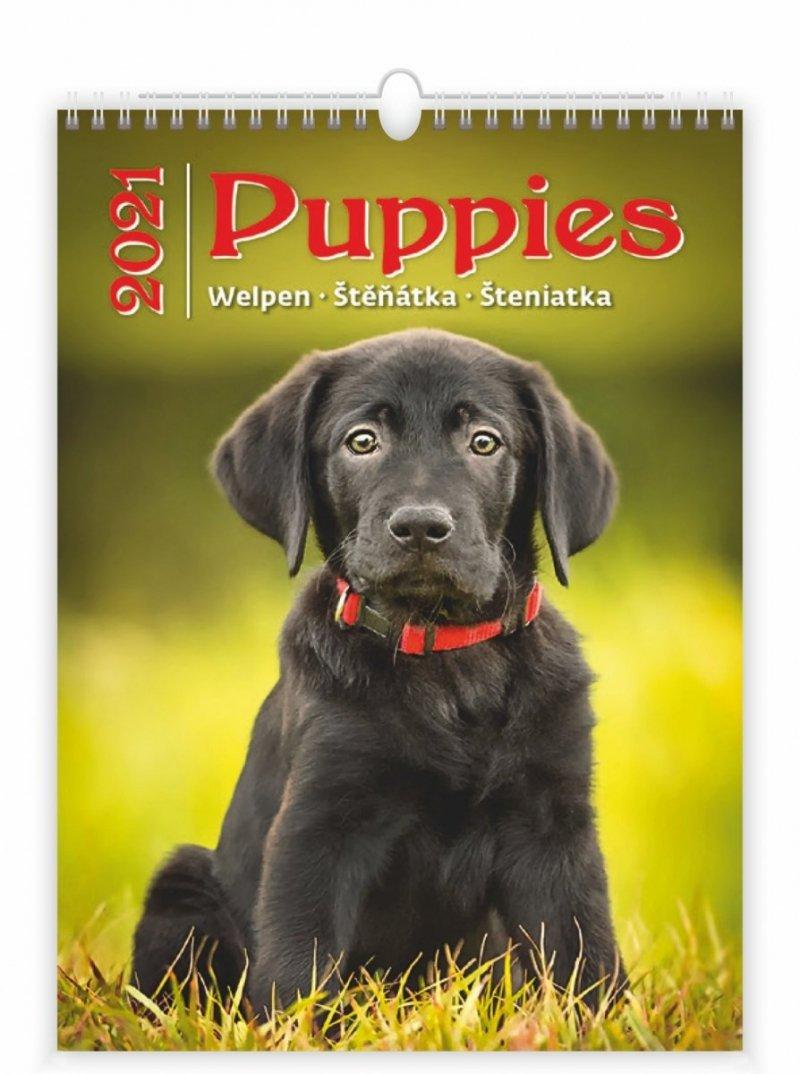 Kalendarz ścienny wieloplanszowy Puppies 2021 - okładka