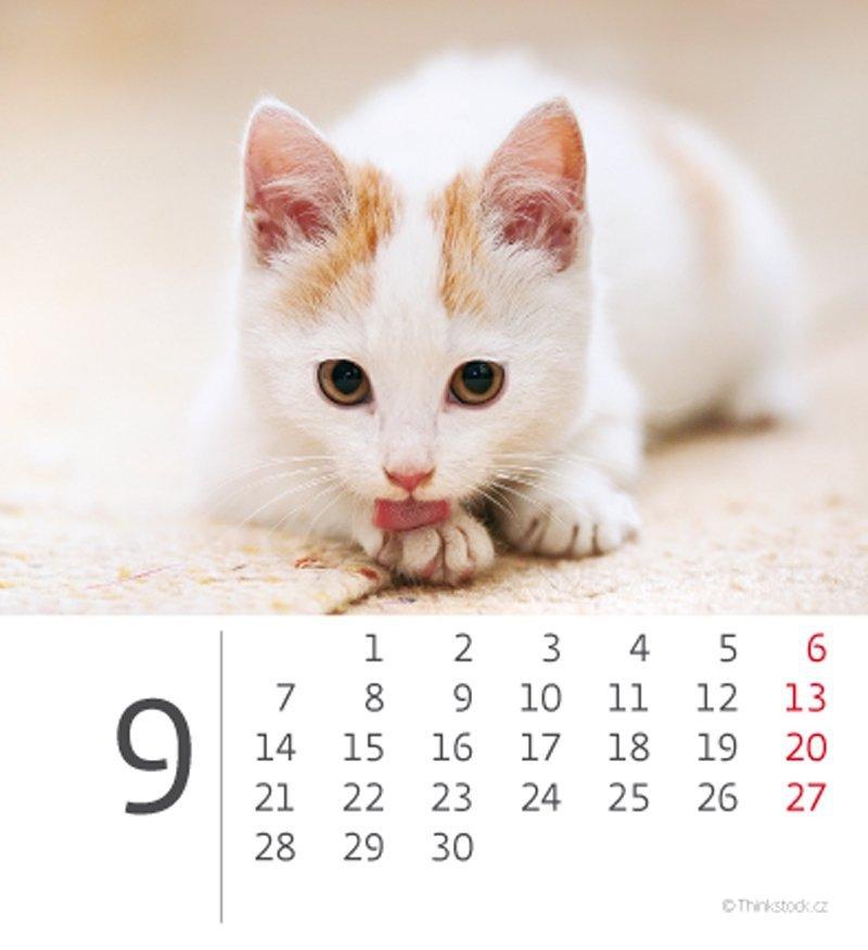 Kalendarz biurkowy 2020 mini Kotki - wrzesień