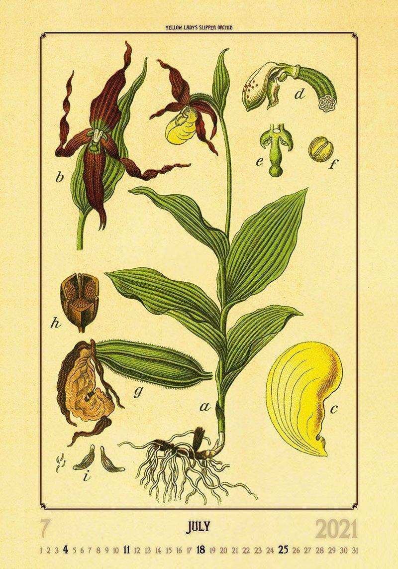 Kalendarz ścienny wieloplanszowy Herbarium 2021 - lipiec 2021