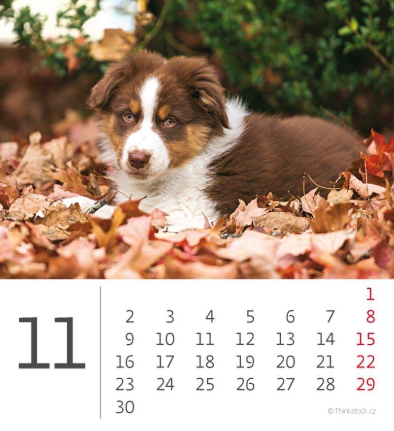 Kalendarz biurkowy mini Pieski 2020 - listopad