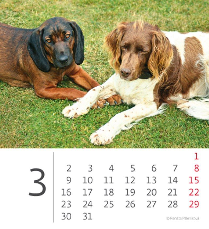 Kalendarz biurkowy mini Pieski 2020 - marzec