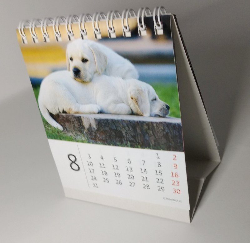 Kalendarz biurkowy mini Pieski 2020 - sierpień 2020