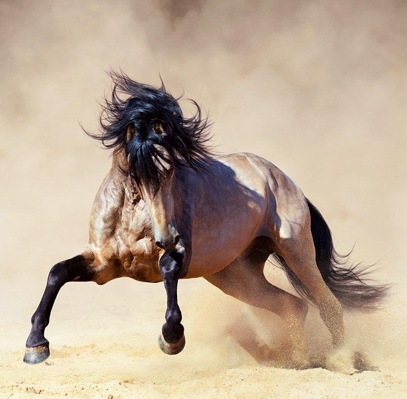 Kalendarz ścienny wieloplanszowy Horses 2022 z naklejkami - kwiecień 2022