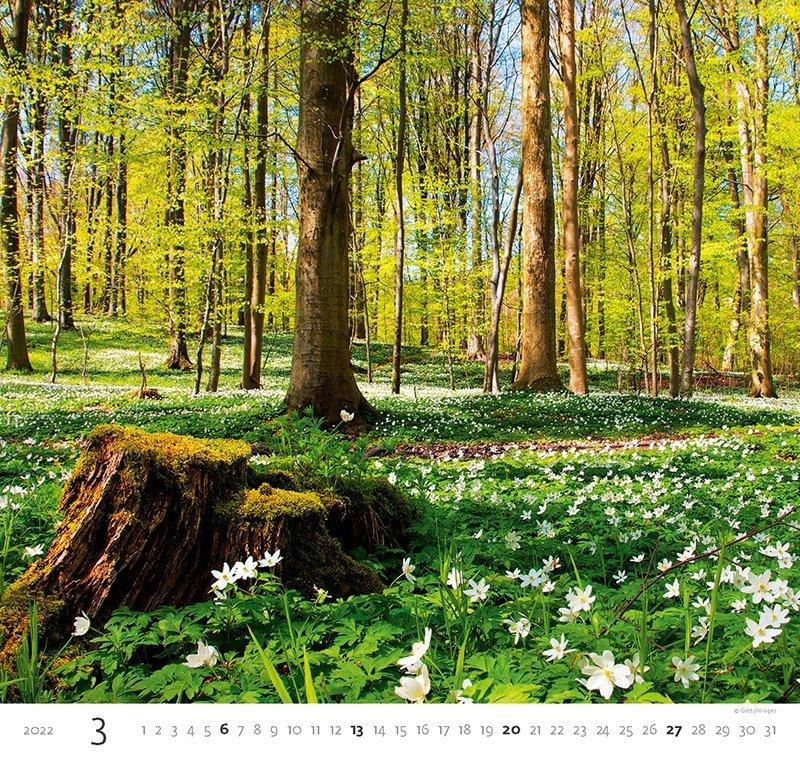 Kalendarz ścienny wieloplanszowy Forest 2022 - marzec 2022