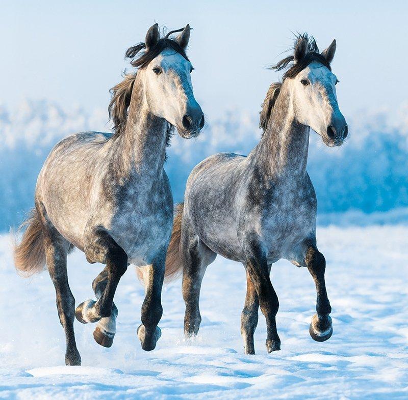 Kalendarz ścienny wieloplanszowy Horses 2022 z naklejkami - luty 2022