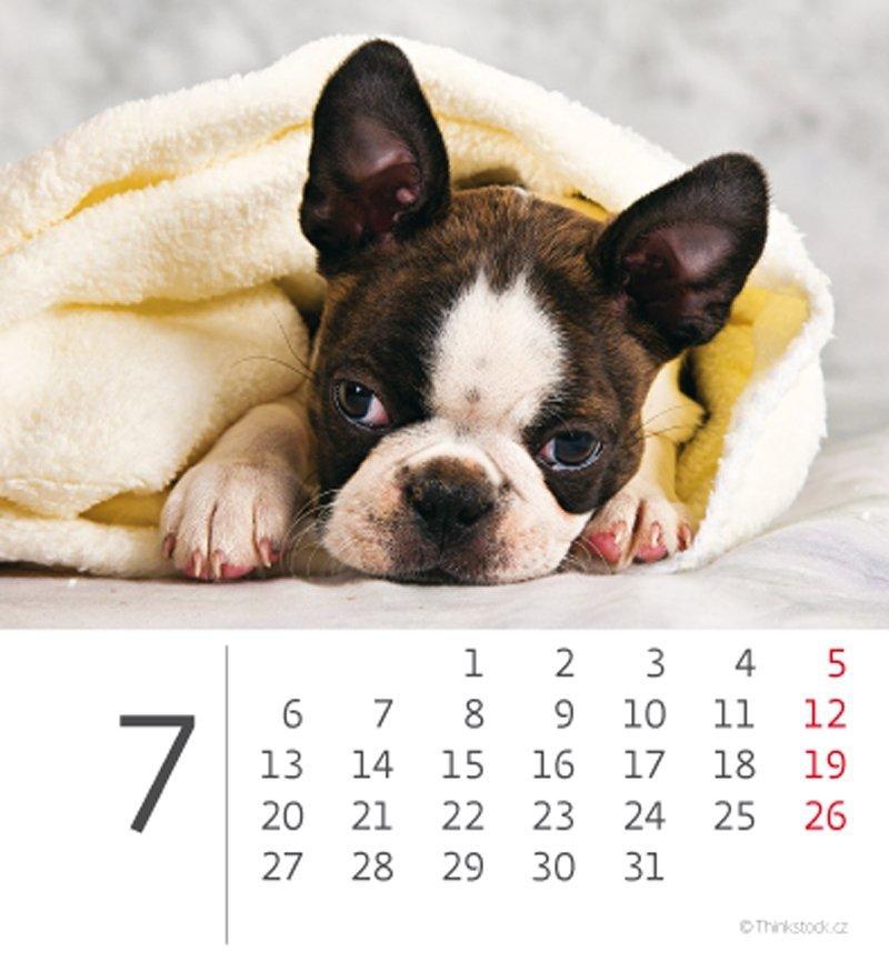Kalendarz biurkowy mini Pieski 2020 - lipiec