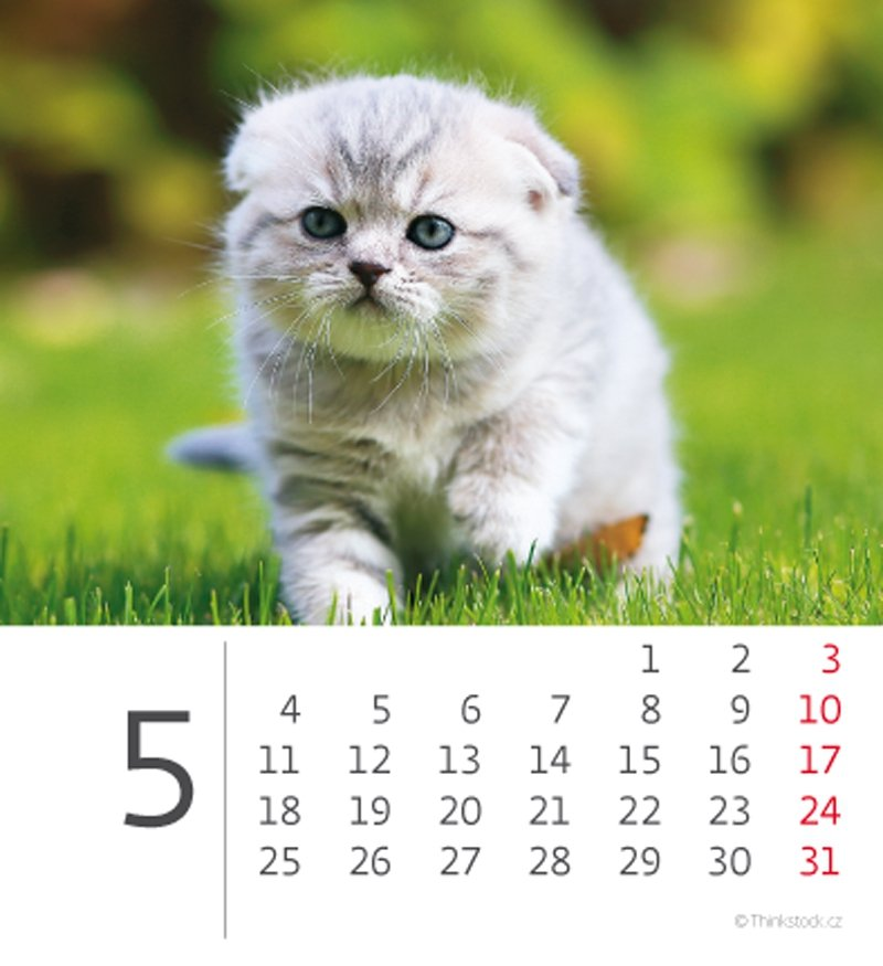 Kalendarz biurkowy 2020 mini Kotki - maj