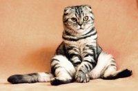 Karmy mokre PREMIUM dla kota