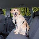 Trixie 1291 Szelki samochodowe dla psa M