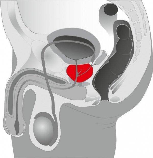 Masażer prostaty silikonowy Ebony