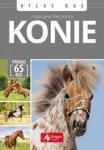 Konie Atlas ras Katarzyna Piechocka