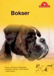 Bokser Seria: Pies na medal