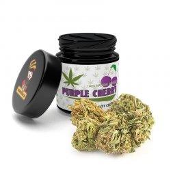 Susz CBD Purple Cherry 1g