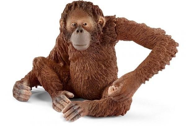Orangutan samica