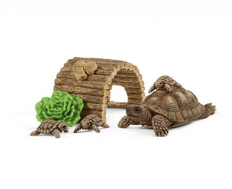 Dom dla żółwi