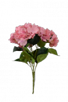 Bukiet hortensja  x 5 kwiatów  MIX