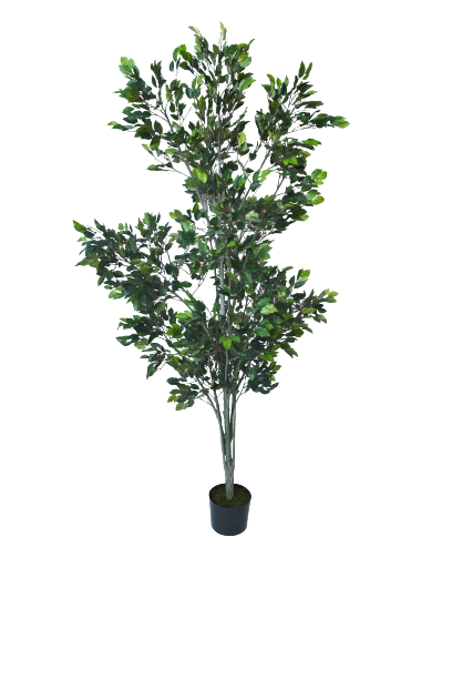 Drzewo Ficus 185 cm - 99/037