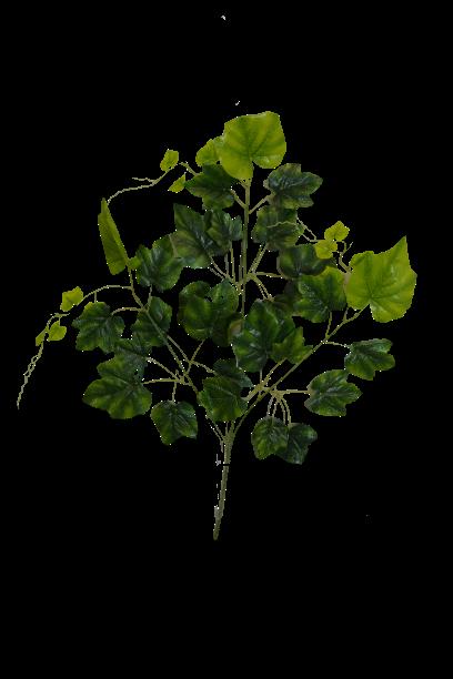 Gałązka winogrono