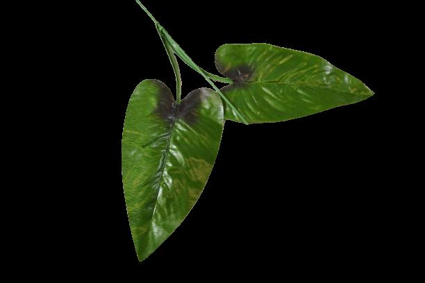 Łodyga Calla - 30196