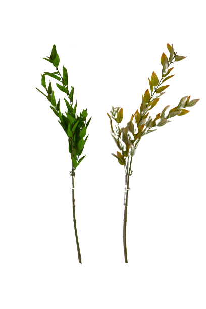 Gałązka ligustr jesienna x 5 MIX - 20BS012