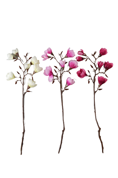 Magnolia na gałązce 7 kwiatów