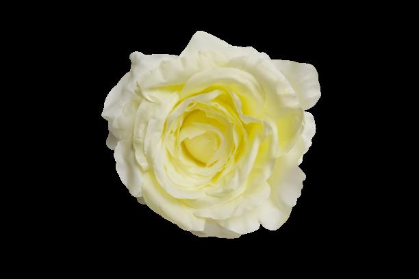 Róża wyrobowa - 20TJ37M