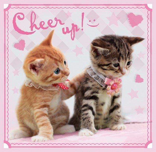 3w1 Sweet&Lovely Słodkie kotki