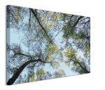 Spring Morning Tree Tops - obraz na płótnie