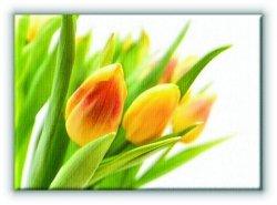 Żółte Tulipany - Obraz na płótnie