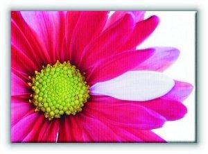 Kwiat - Obraz na płótnie